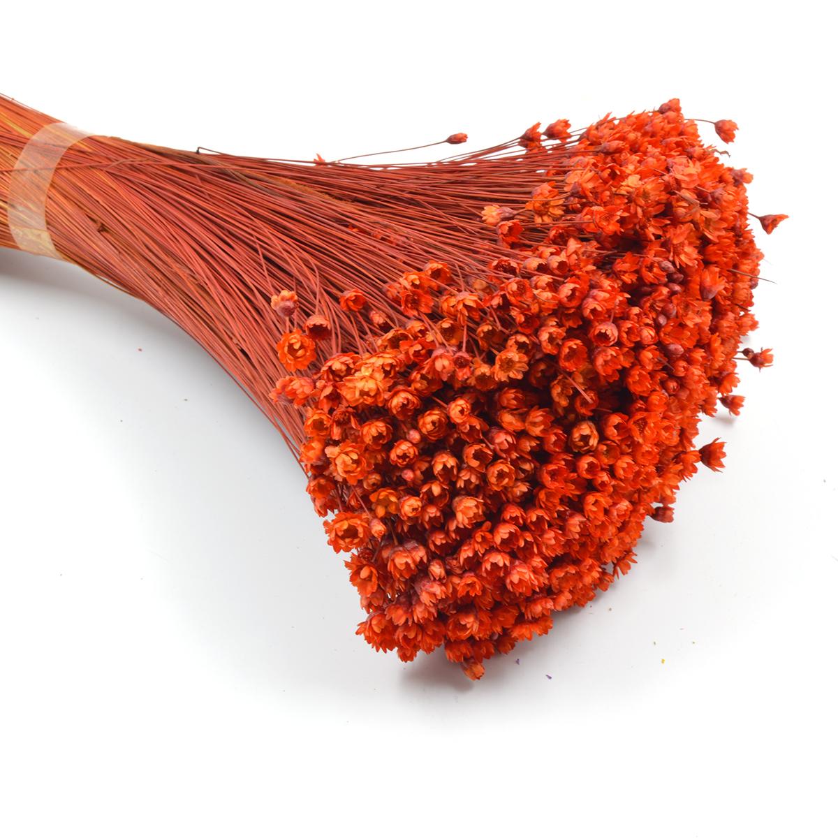 Glixia natural conservata boboc Orange 100gr