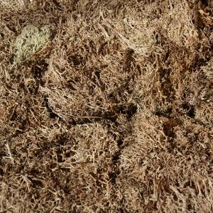 Licheni natural 4kg uscat direct din padure