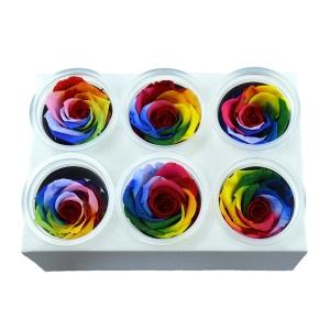 Set 6 Trandafiri Criogenati - Rainbow Model 1