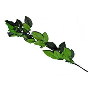 Tulpina pentru Trandafiri Criogenati 40 cm